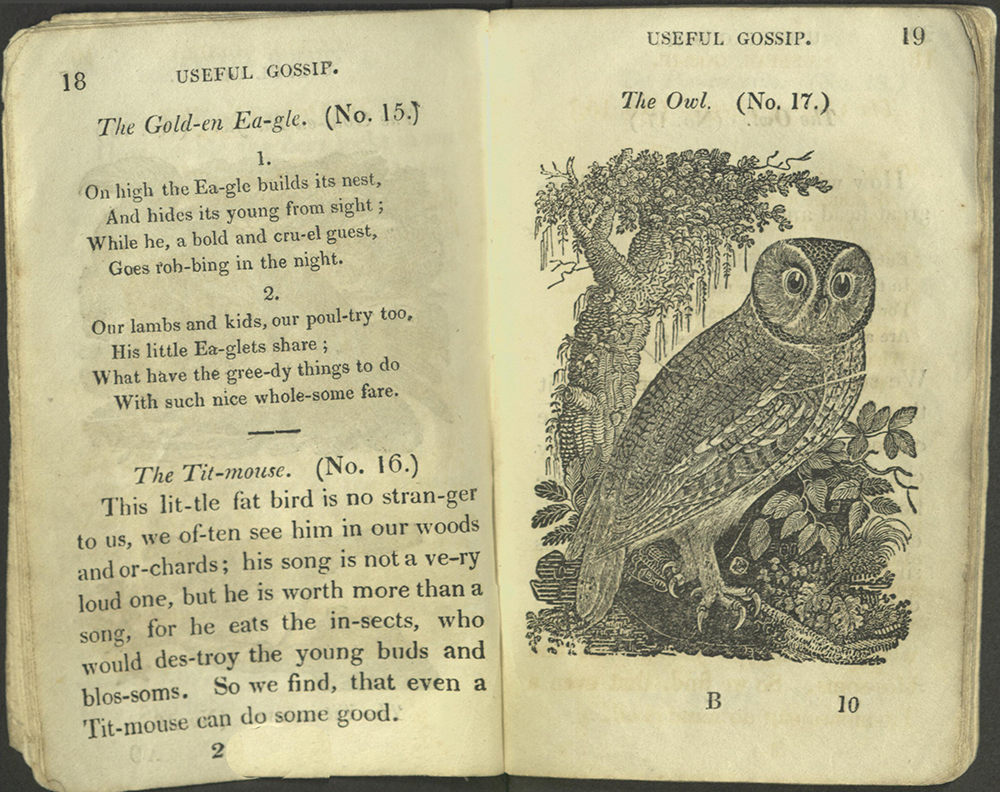 Text for Golden Eagle and Titmouse; image of owl