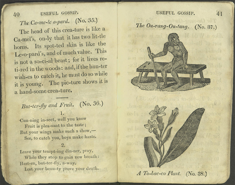 Text fo Cameleopard (giraffe) and Butterflyand Fruit; images for OurangOutang and Tobacco Plant